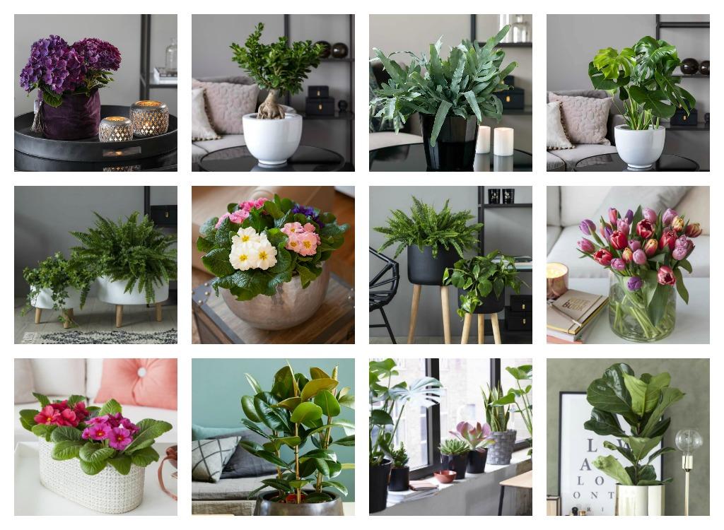 Alle blomar og planter finn du hos Mester Grønn